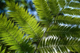 tree-fern-320078_1280